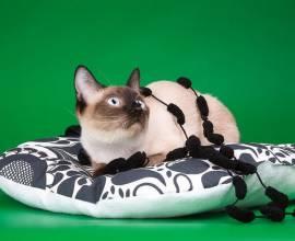 самая маленькая в мире кошка