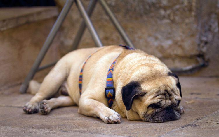 Диронет для собак таблетки