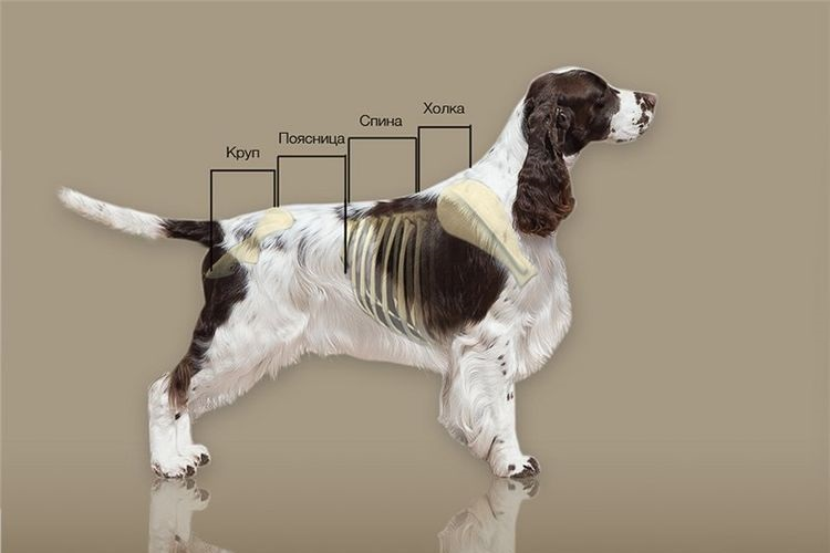 Параметры собаки