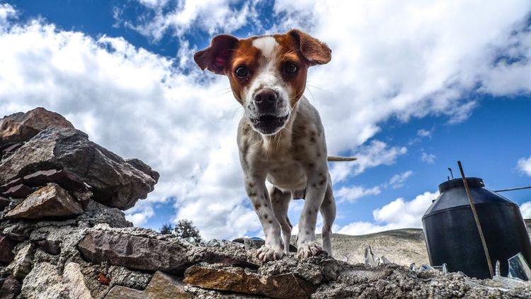 Пятнистая собака