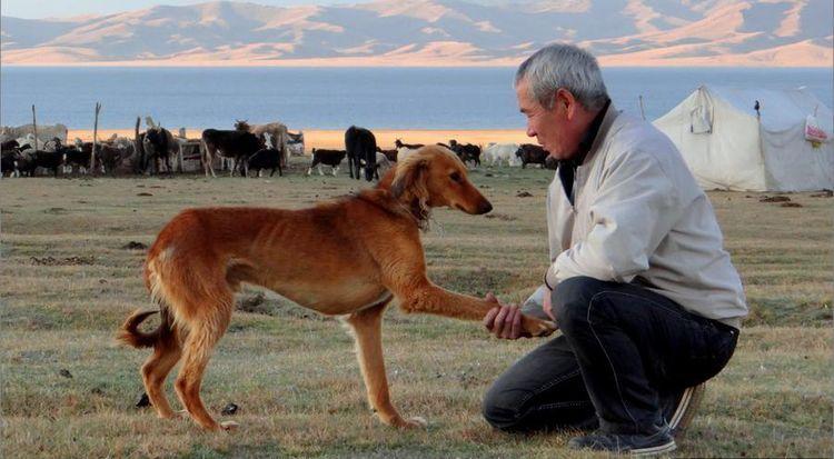 Собака дает лапу хозяину