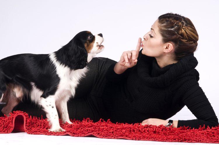Девушка и ее собака