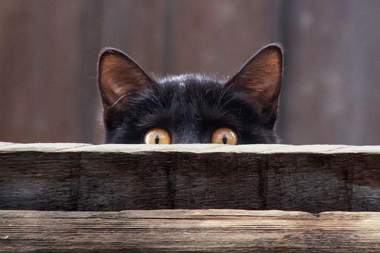 Черный котенок выглядывает из укрытия
