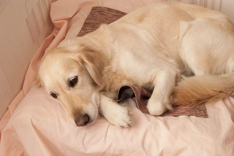 Собака со щенками на коврике