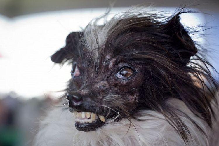 Страшная собака Пинат