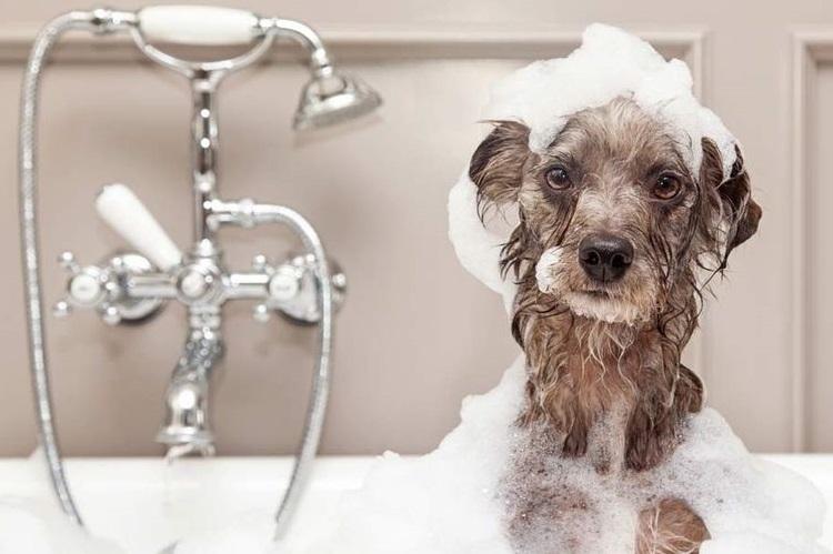 Собака в мыльной пене