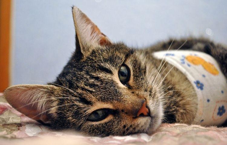 Как долго кошка отходит от наркоза