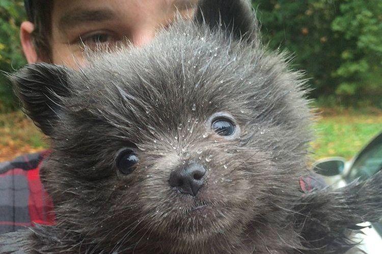 Черный щенок на руках у хозяина