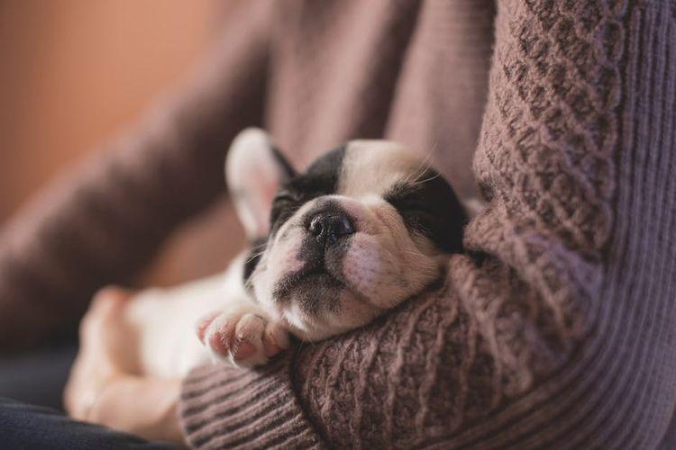 СОбака спит на руках у хозяйки