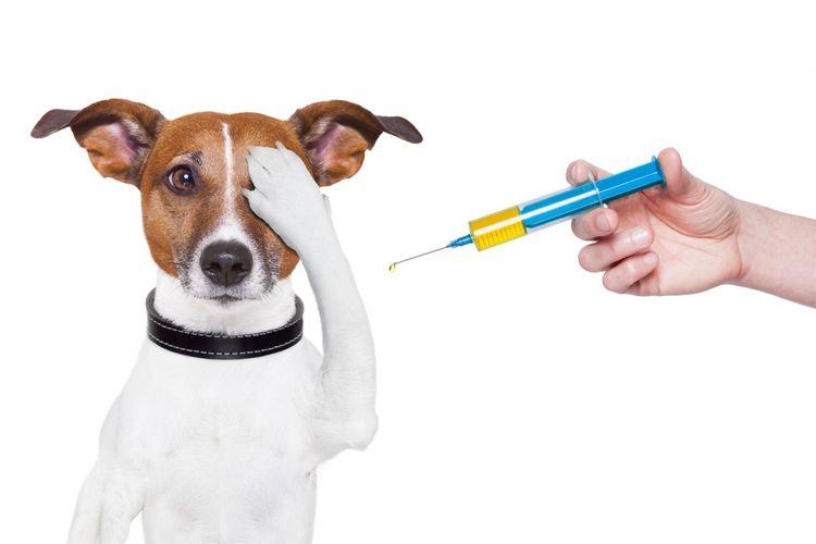 Собака и шприц