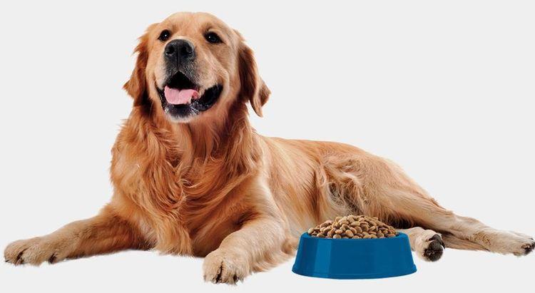 Собака с миской корма
