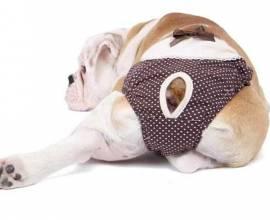 Собака в гигиенических трусах