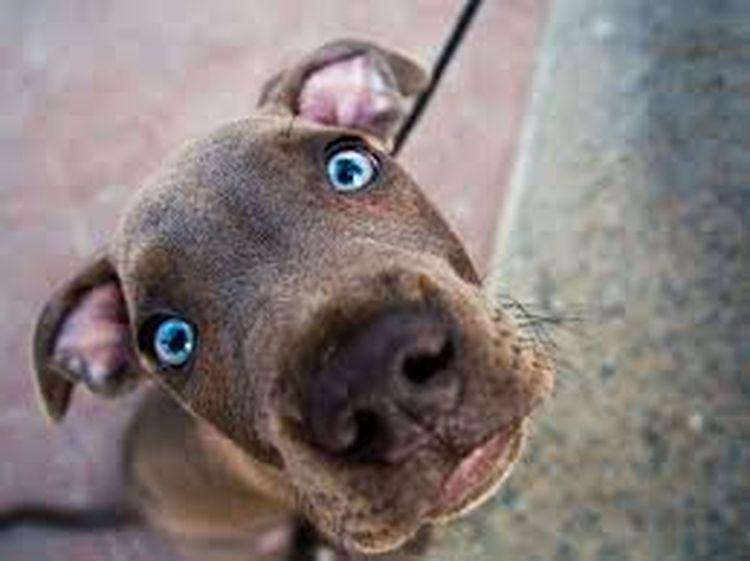 Загадки про собак