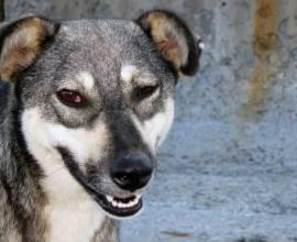 Собака подозревака