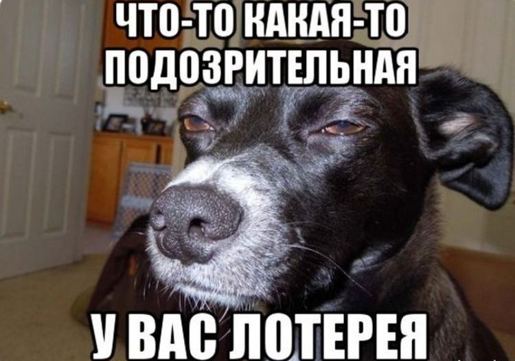 Собака-подозревака мем