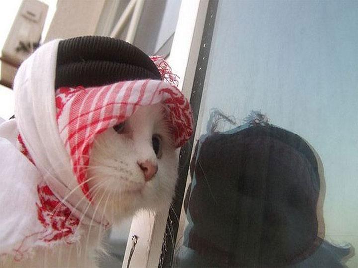 арабская кошка