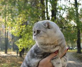 поррда кошек Флэппиг