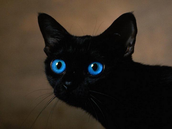 черная голубоглазка