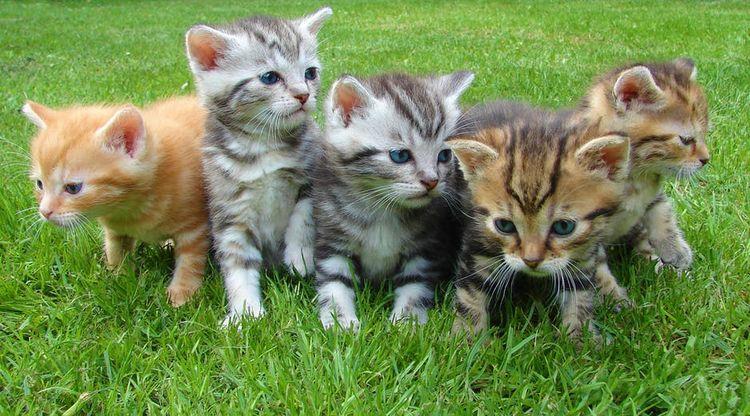 Котята на траве