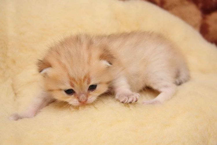 Маленький котенок на полу