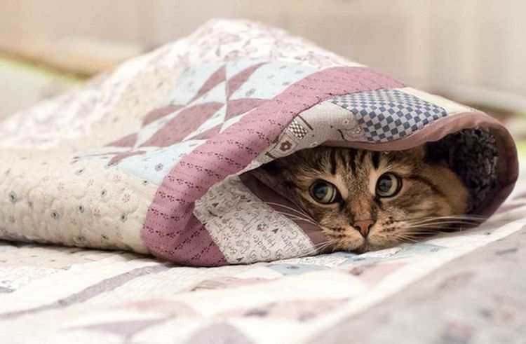 Кот прячется