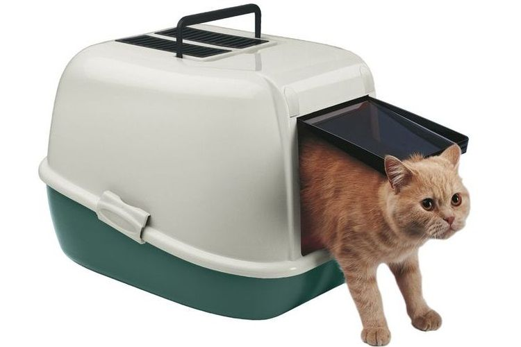 Best indoor cat litter box
