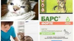 Адаптировать взрослого кота