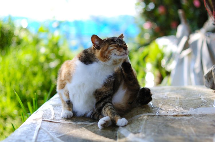 Кот чешет лапой за ухом