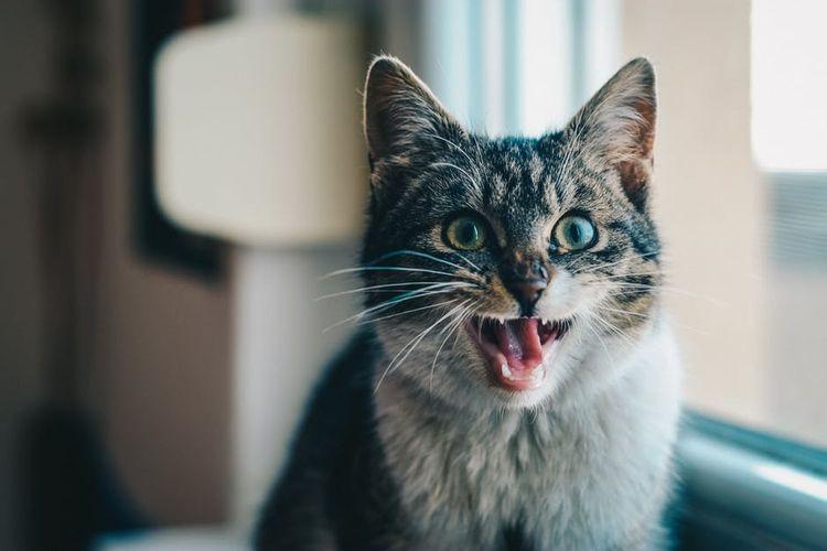 Легкие клички для котов мальчиков