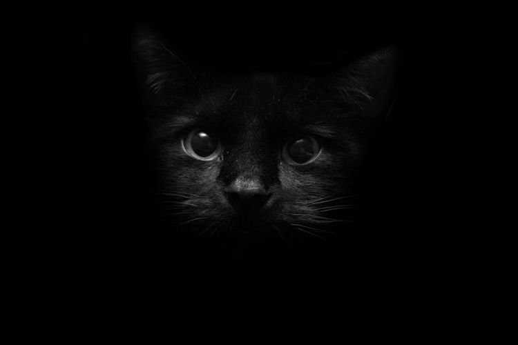 Черная кошечка