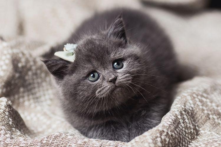 Интересные русские клички для кошек