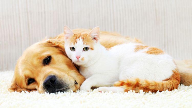 Собака и кошка спят