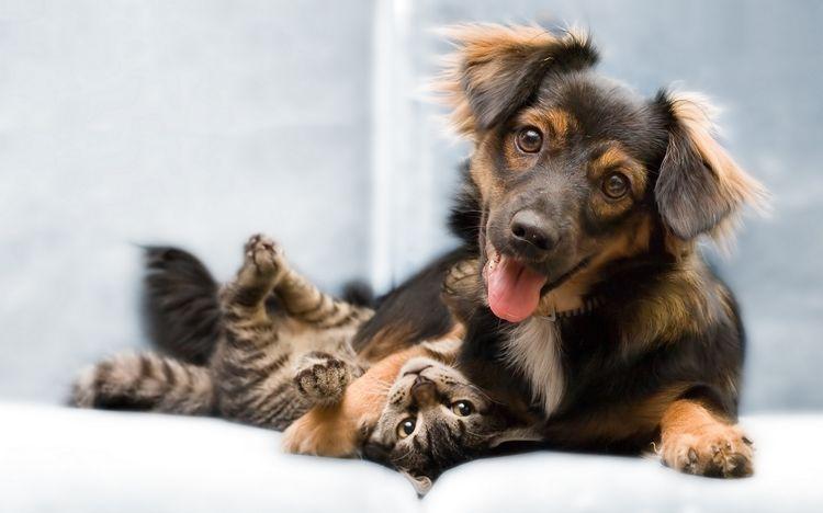 Собака и кот дружат