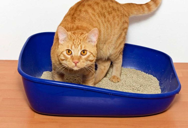 why has my cat stopped peeing in the litter box