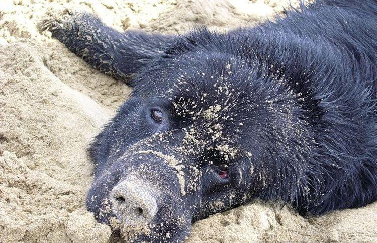 Черная собака лежит на земле