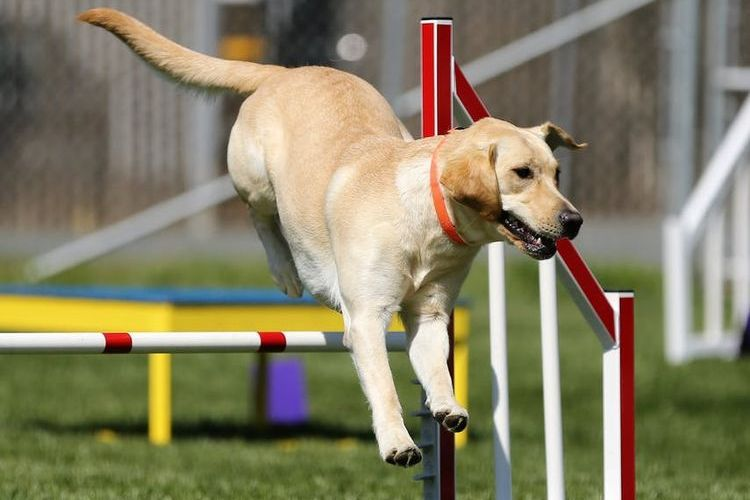 Пес на спортивной площадке