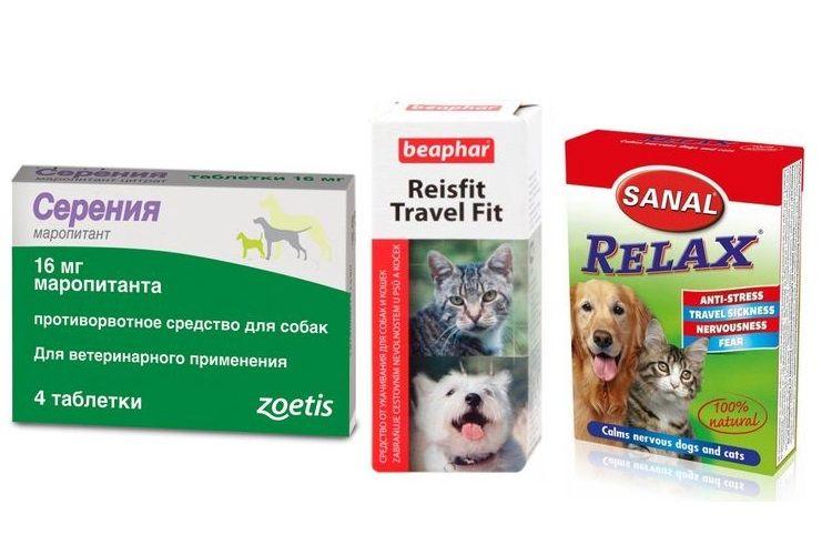 Лекарства от укачивания для собак