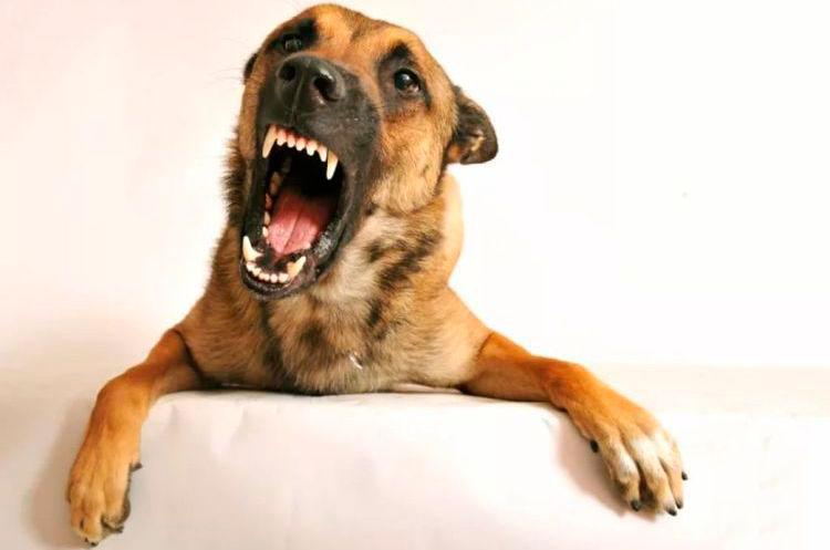 Возбужденная собака