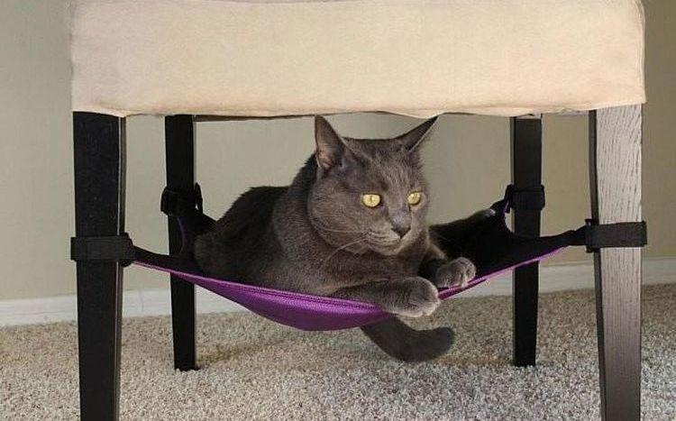 Кот в гамаке под стулом