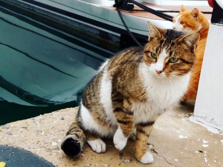 эгейская кошка на причале