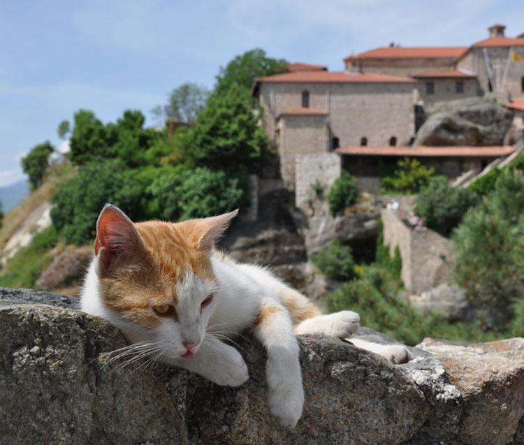 эгейская кошка фото