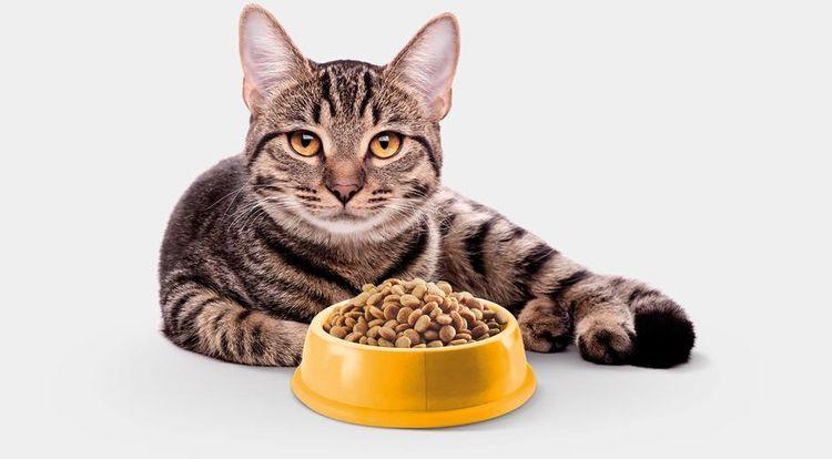 Кот у миски с кормом