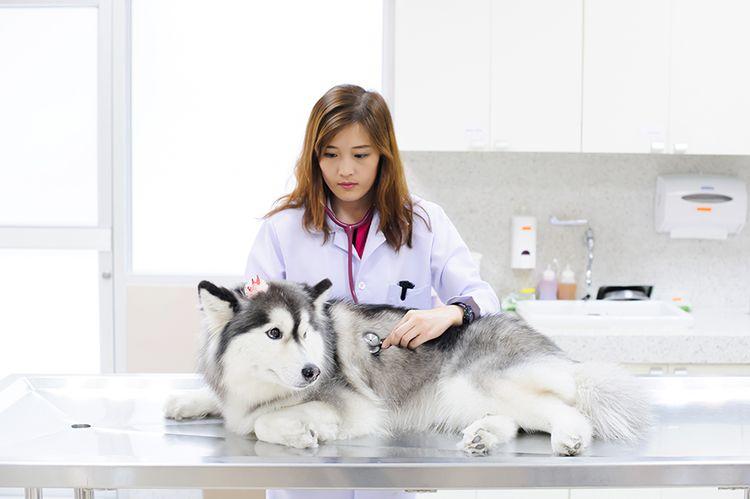 Обследование собаки