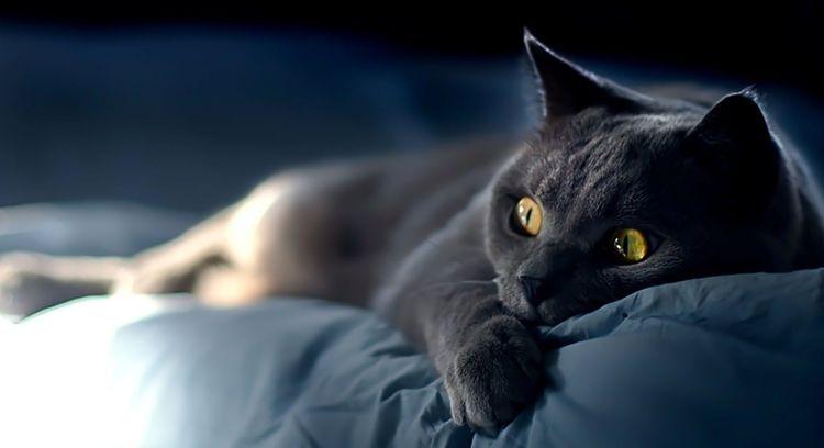 Кошка в постели
