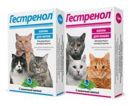 Капли Гестренол для кошек и котов