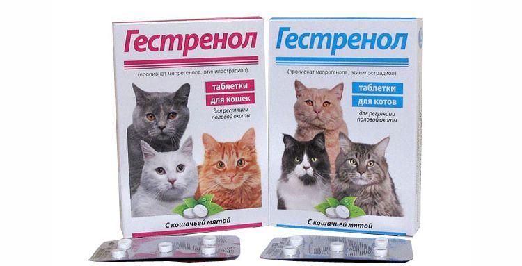 Таблетки Гестренол для кошек и котов