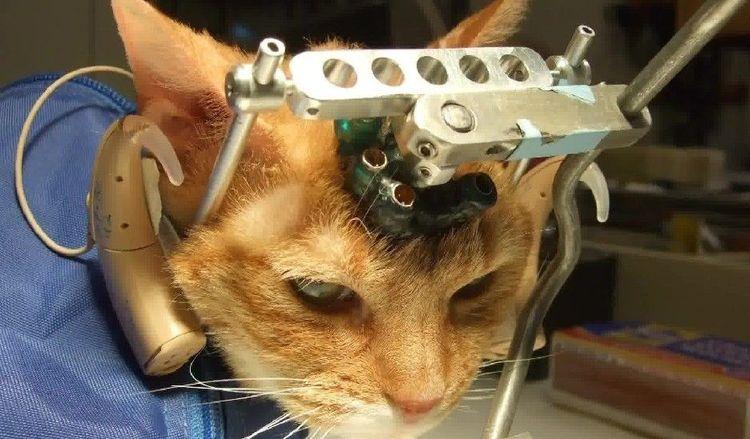 Дивгностика инсульта у кошки