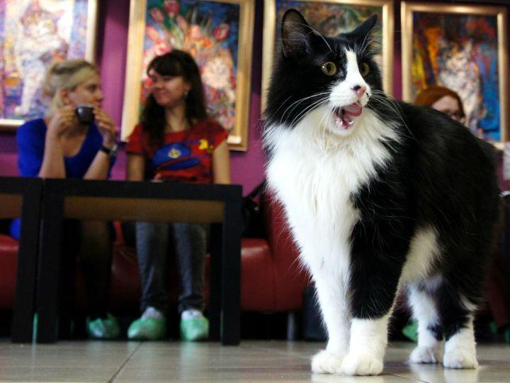 Кафе Республика кошек
