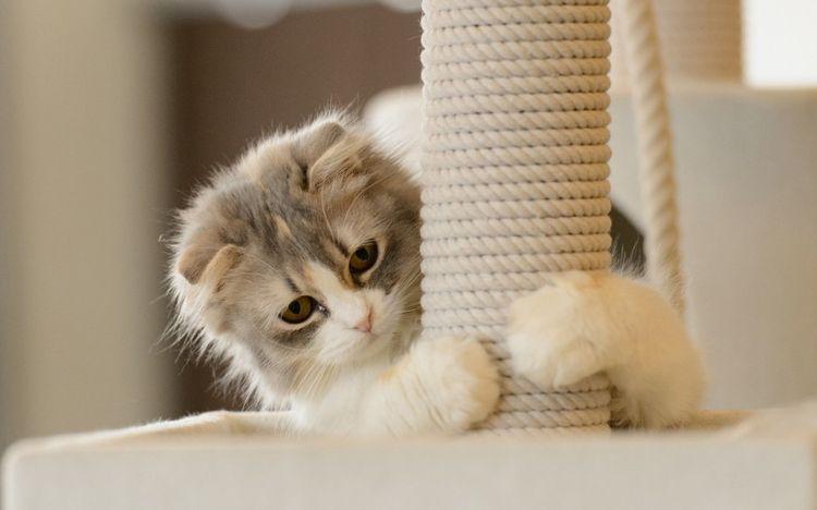 Котенок и когтеточка