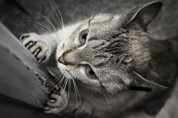 Кот точит когти об дверь